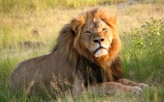 Charges on Walter Palmer Dropped