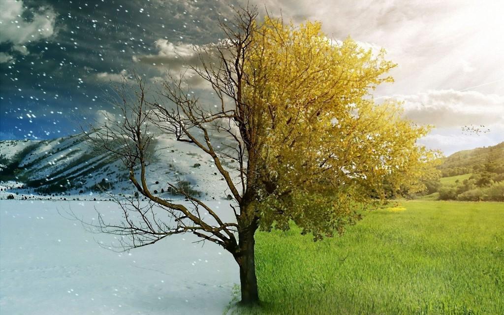 Summer Vs Winter Which Is Better Zephyrus