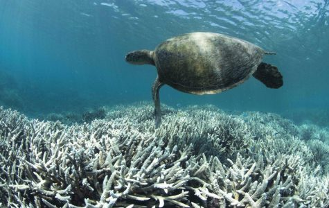 Don't Mourn the Great Barrier Reef– Save It